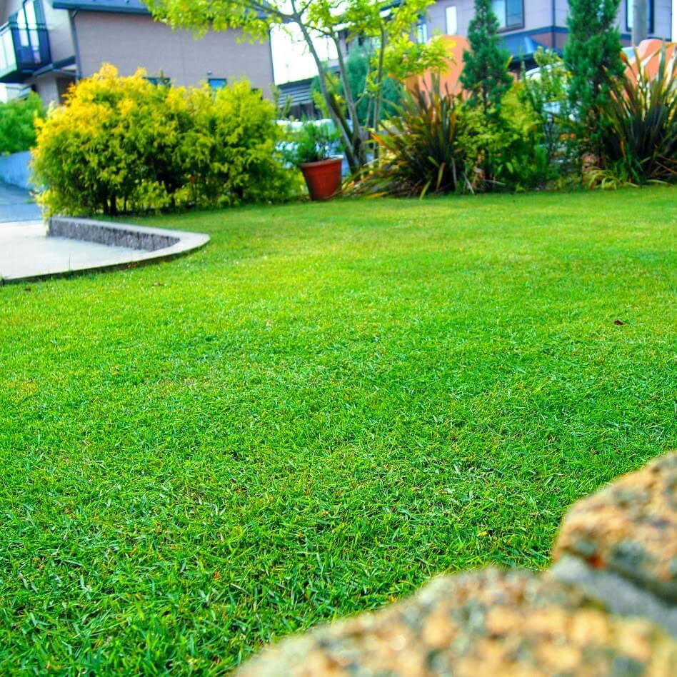雨上ありの芝生