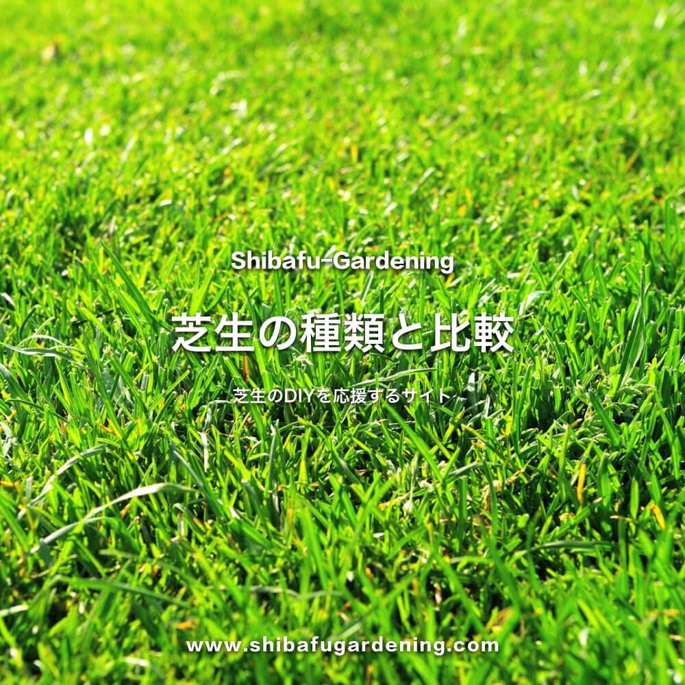 芝生の種類と比較