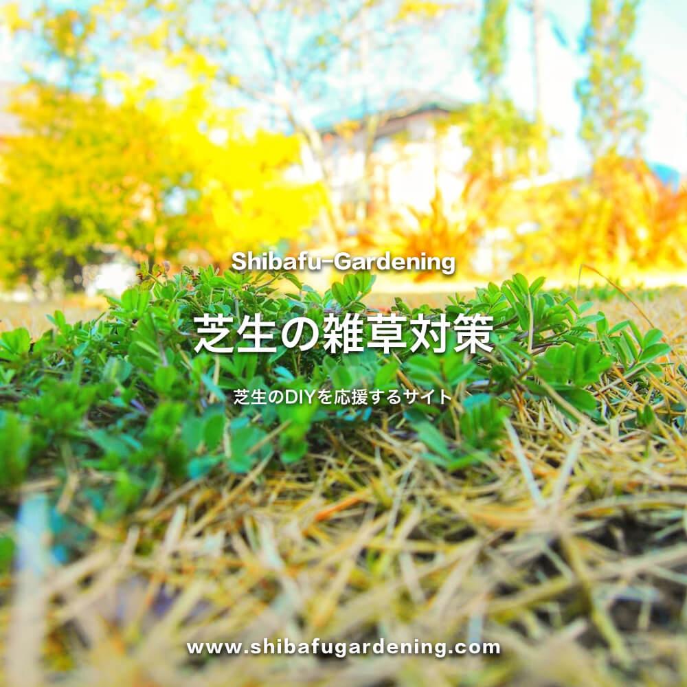 芝生の雑草対策