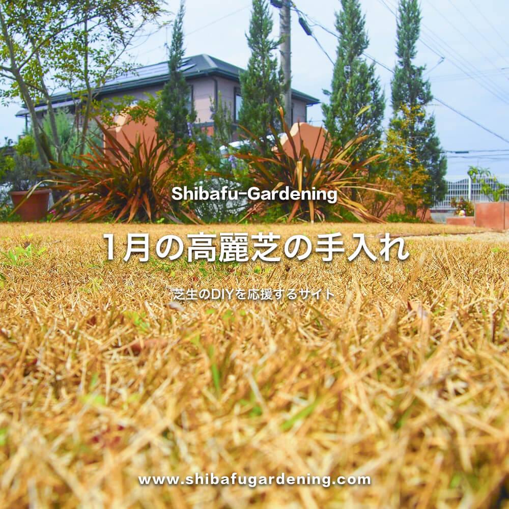 1月の高麗芝の手入れ