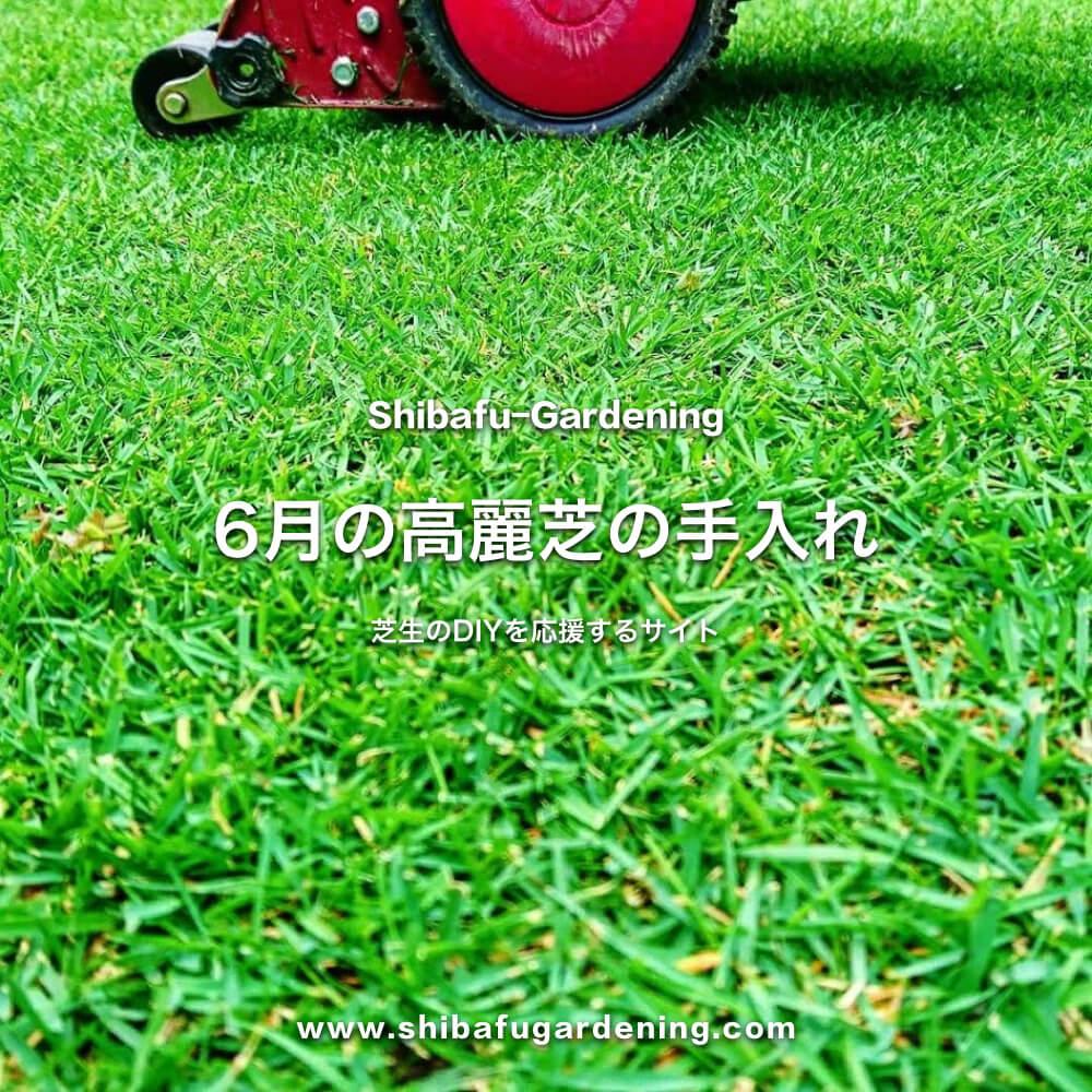6月の高麗芝の手入れ