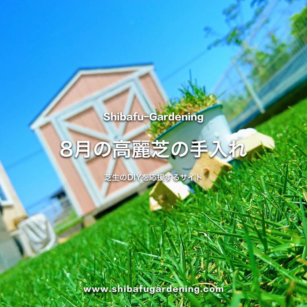8月の高麗芝の手入れ