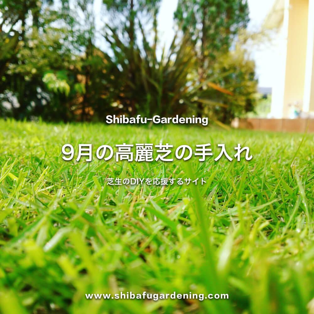 9月の高麗芝の手入れ