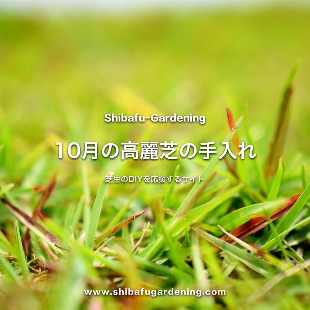 10月の高麗芝の手入れ