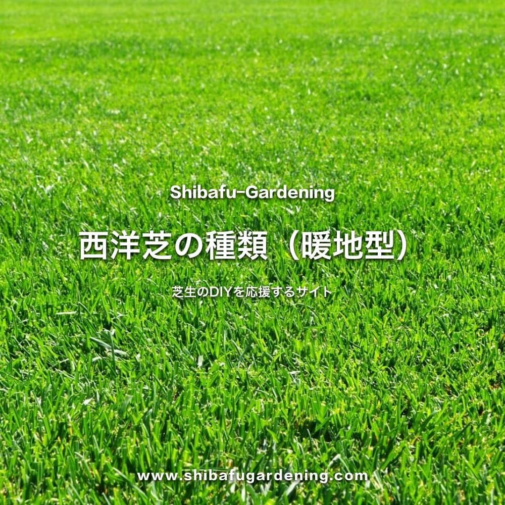 暖地型西洋芝の種類