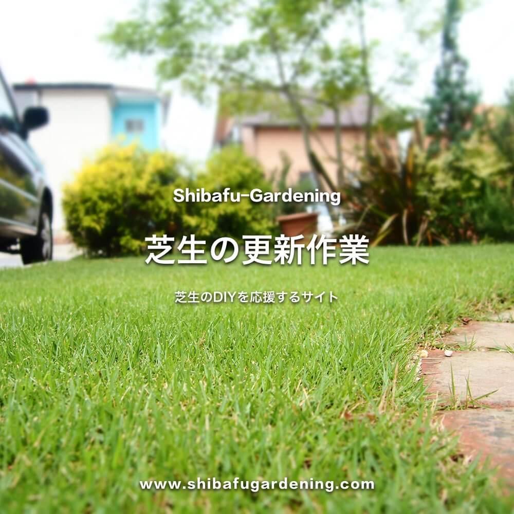 芝生の更新作業
