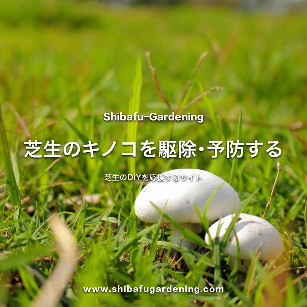 芝生のキノコを駆除・予防する方法