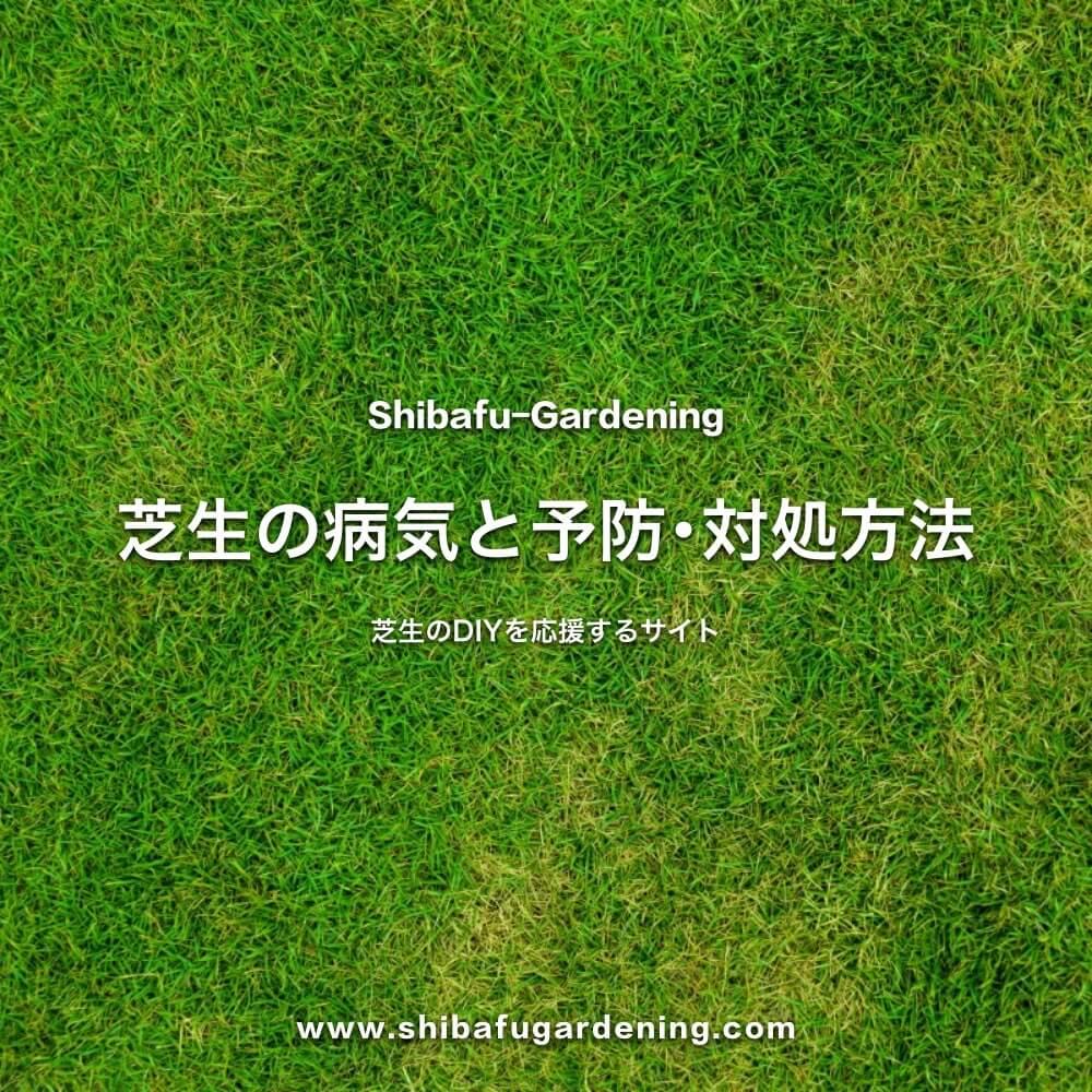 芝生の病気と予防・対処方法