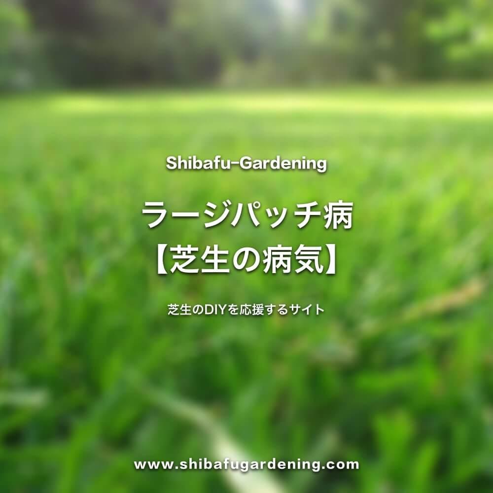ラージパッチ病【芝生の病気】