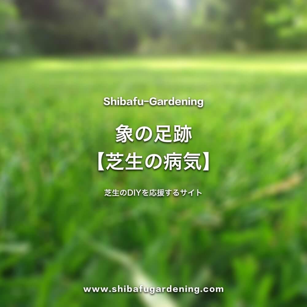 象の足跡【芝生の病気】