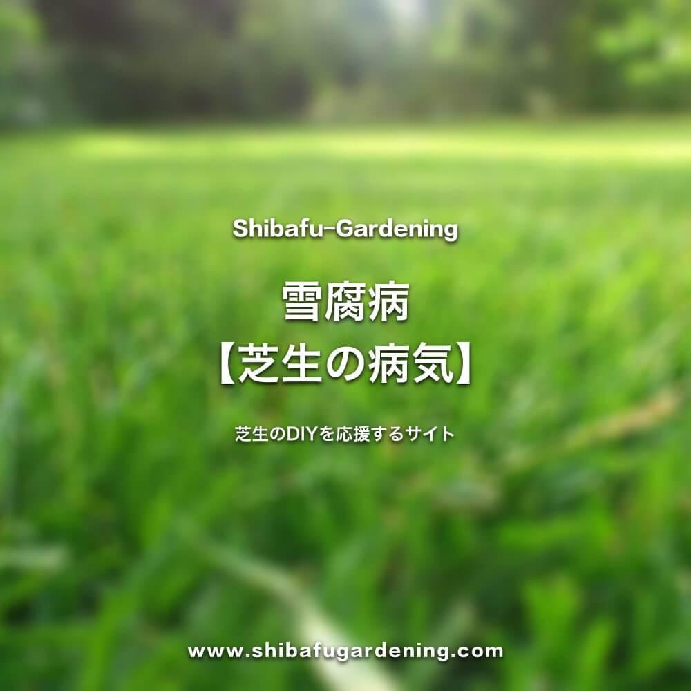 雪腐病【芝生の病気】