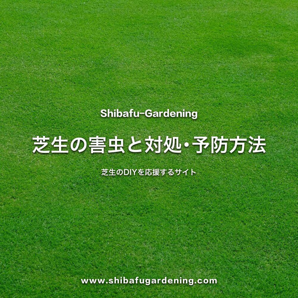芝生の害虫と対処・予防方法