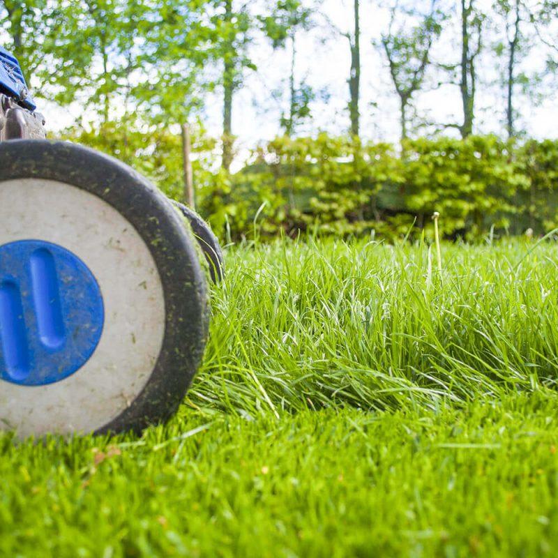 芝生と芝刈り機