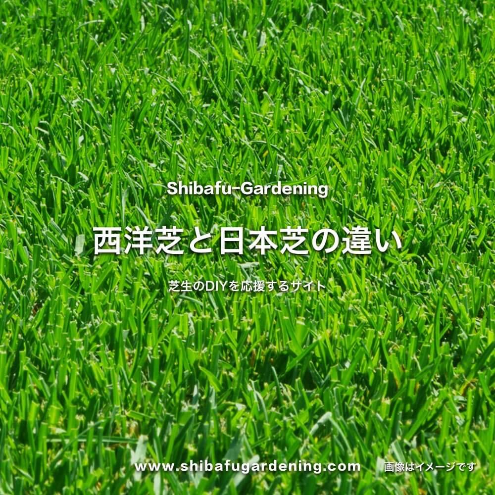 西洋芝と日本芝の違い